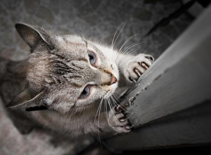Que Faire Pour Que Votre Chat Ne Griffe Pas Tous Vos