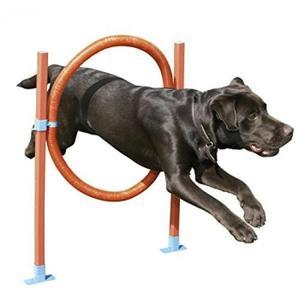 chien-sauteur