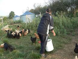 entretien-poules