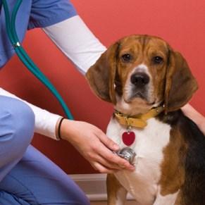 S occuper d un chien c est toute une affaire fanimaux - Jeux de chiens a s occuper ...